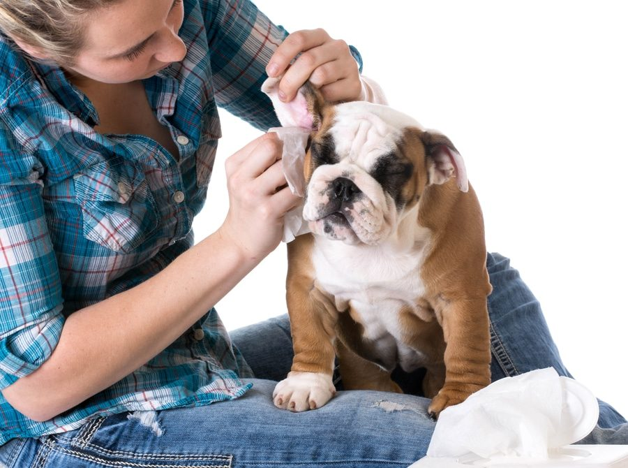 Best Grooming Brush For Bulldogs Plus 9