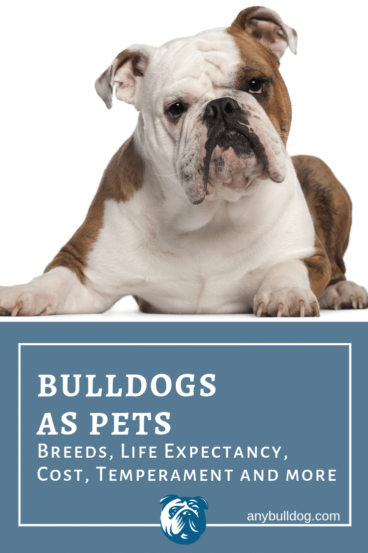 Bulldogs As Pets Breeds Life Expectancy Cost And