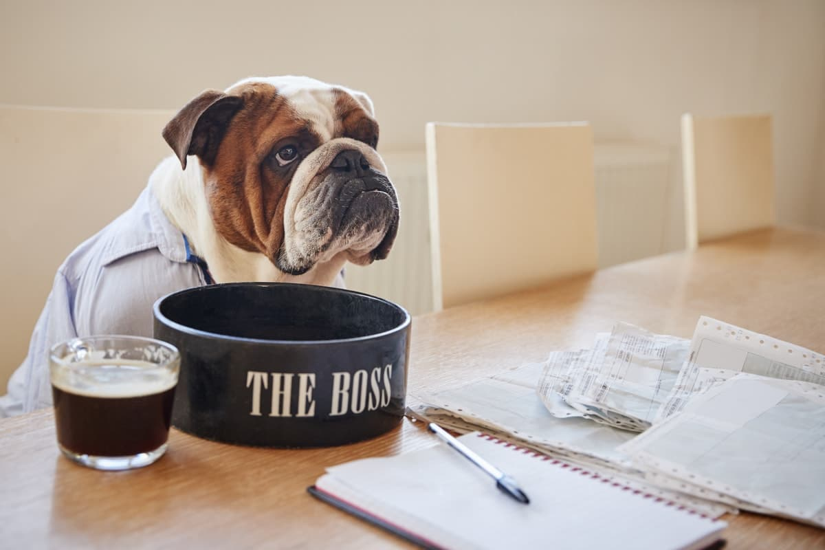 The Ultimate Guide To What Bulldogs Can